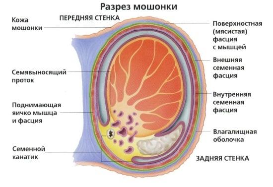 Повреждение семенного канатика симптомы