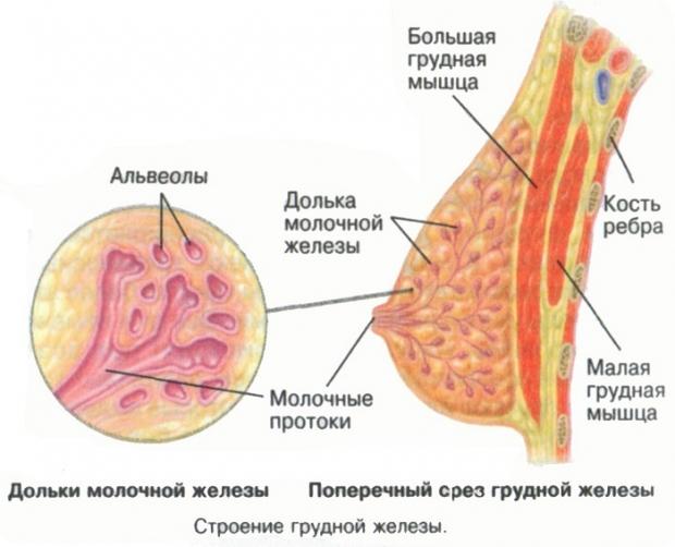 Что такое киста молочной железы