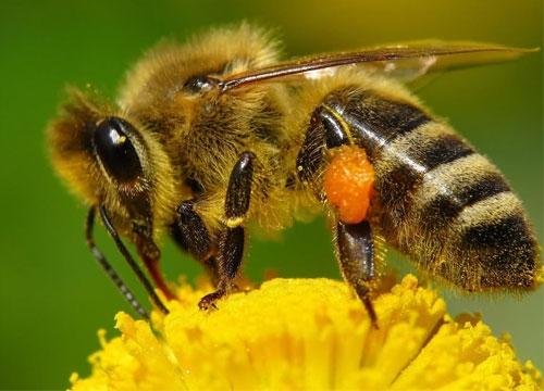 Укус полового члена (пениса). Что делать, если укусила пчела, змея, собака или человек