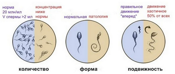 Показатели спермиограммы воз 2010