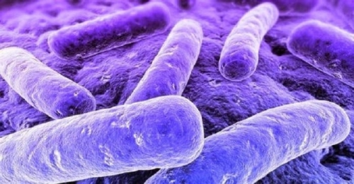 Микоплазма гениталиум признаки диагностика и лечение урогенитального микоплазмоза