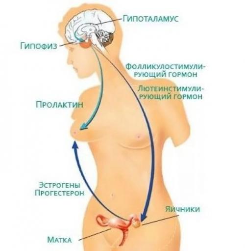 Эндокринное бесплодие. Симптомы, диагностика и лечение эндокринного бесплодия