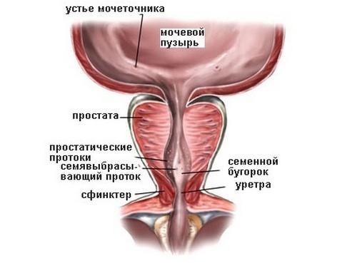Пиоспермия у мужчин 43